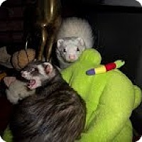 Adopt A Pet :: Tucker - Spokane Valley, WA