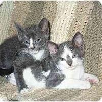 Adopt A Pet :: Lizzie - Secaucus, NJ
