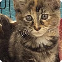 Adopt A Pet :: Dorie - Port Republic, MD