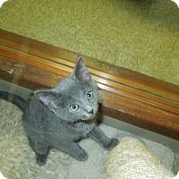 Adopt A Pet :: Mistletoe - Medina, OH
