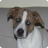 Adopt A Pet :: Carley - in Maine - kennebunkport, ME