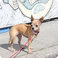 Adopt A Pet :: Bebe-ji - San Francisco, CA