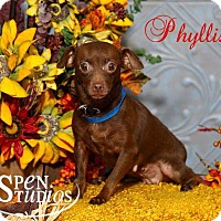 Adopt A Pet :: Phyllis - Valparaiso, IN
