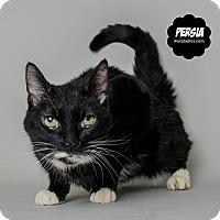 Adopt A Pet :: Persia - Wyandotte, MI