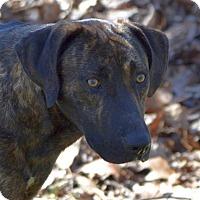 Adopt A Pet :: Jethro - Sylva, NC