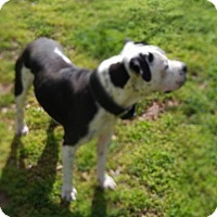 Adopt A Pet :: Monty - Lincolnton, NC