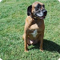Adopt A Pet :: Link - Aubrey, TX