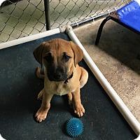 Adopt A Pet :: Cappy - Hohenwald, TN