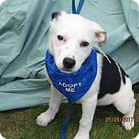 Adopt A Pet :: Rodeo-ADOPTED - Glastonbury, CT
