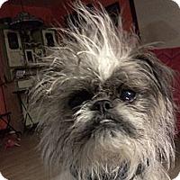 Adopt A Pet :: ET - Albuquerque, NM