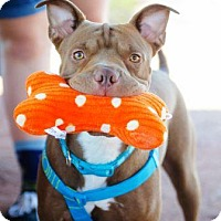 Adopt A Pet :: Oakley - Gilbert, AZ