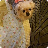 Adopt A Pet :: SANDI - Sterling, MA