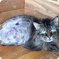 Adopt A Pet :: Rosemary - Greensburg, PA
