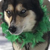 Adopt A Pet :: DeeDee - Jefferson, NH