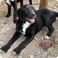 Adopt A Pet :: Tillie - Saratoga, NY