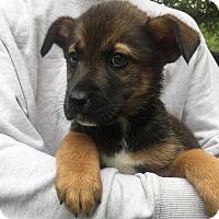 Adopt A Pet :: Baxter - Kittery, ME