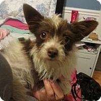 Adopt A Pet :: Cambell - Seattle, WA