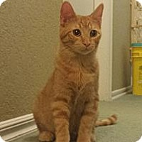 Adopt A Pet :: Ginger - Edmond, OK