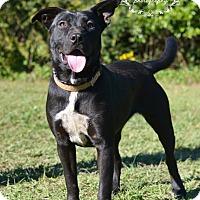 Adopt A Pet :: Hannah - Fort Valley, GA