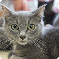 Adopt A Pet :: Iris - Merrifield, VA