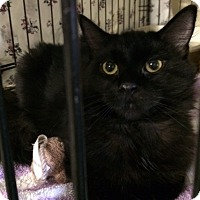 Adopt A Pet :: Rangar - Byron Center, MI