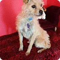 Adopt A Pet :: Tahlula - Phoenix, AZ