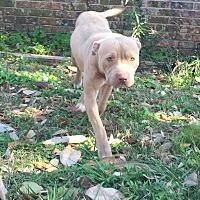Adopt A Pet :: Chloe - Pipersville, PA