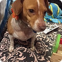 Adopt A Pet :: Camilla - Fort Atkinson, WI