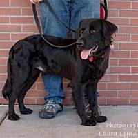 Adopt A Pet :: Malcolm - Clovis, CA