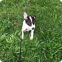 Adopt A Pet :: Bryan - Waldorf, MD