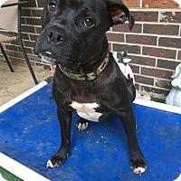 Adopt A Pet :: Ruger - Columbia, TN