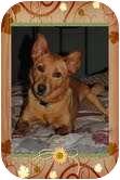 Basenji Mix Dog for adoption in Foster, Rhode Island - Crocket