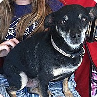 Adopt A Pet :: Nigel - North Hollywood, CA