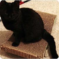 Adopt A Pet :: Bella - Alexandria, VA