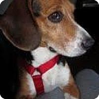 Adopt A Pet :: Gatsby - Phoenix, AZ