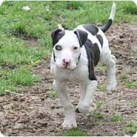 Adopt A Pet :: Rucas - DFW, TX