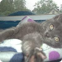 Adopt A Pet :: Wheeley - Little Neck, NY
