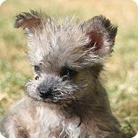 Adopt A Pet :: Peanut - Tumwater, WA