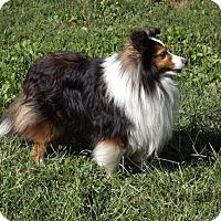 Adopt A Pet :: Jackson - Abingdon, MD