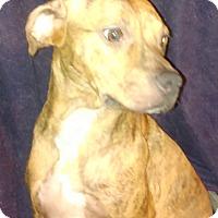 Adopt A Pet :: Tikki - Lebanon, CT