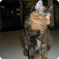 Adopt A Pet :: Tigerlily - Milwaukee, WI