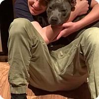 Adopt A Pet :: Hannah - Covington, TN