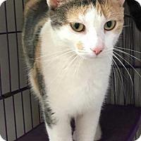 Adopt A Pet :: Anne Burrell - Orleans, VT