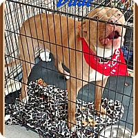 Adopt A Pet :: Dude/Dylan - Ahoskie, NC