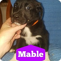 Adopt A Pet :: Mable - Cleveland, OK