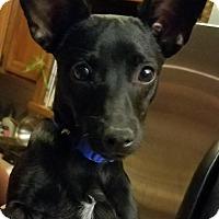 Adopt A Pet :: Noche - Tucson, AZ