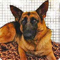 Adopt A Pet :: Jenna - Clifton Forge, VA