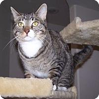 Adopt A Pet :: Piglet - Colorado Springs, CO