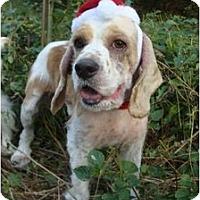 Adopt A Pet :: Nicholas - Sugarland, TX