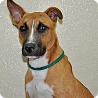 Adopt A Pet :: Luca - Port Washington, NY